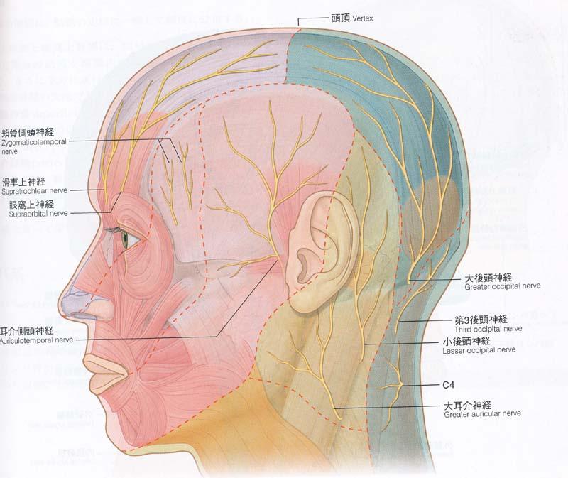 頭皮 神経 症
